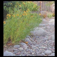 Image Dry Streambed Landscapes